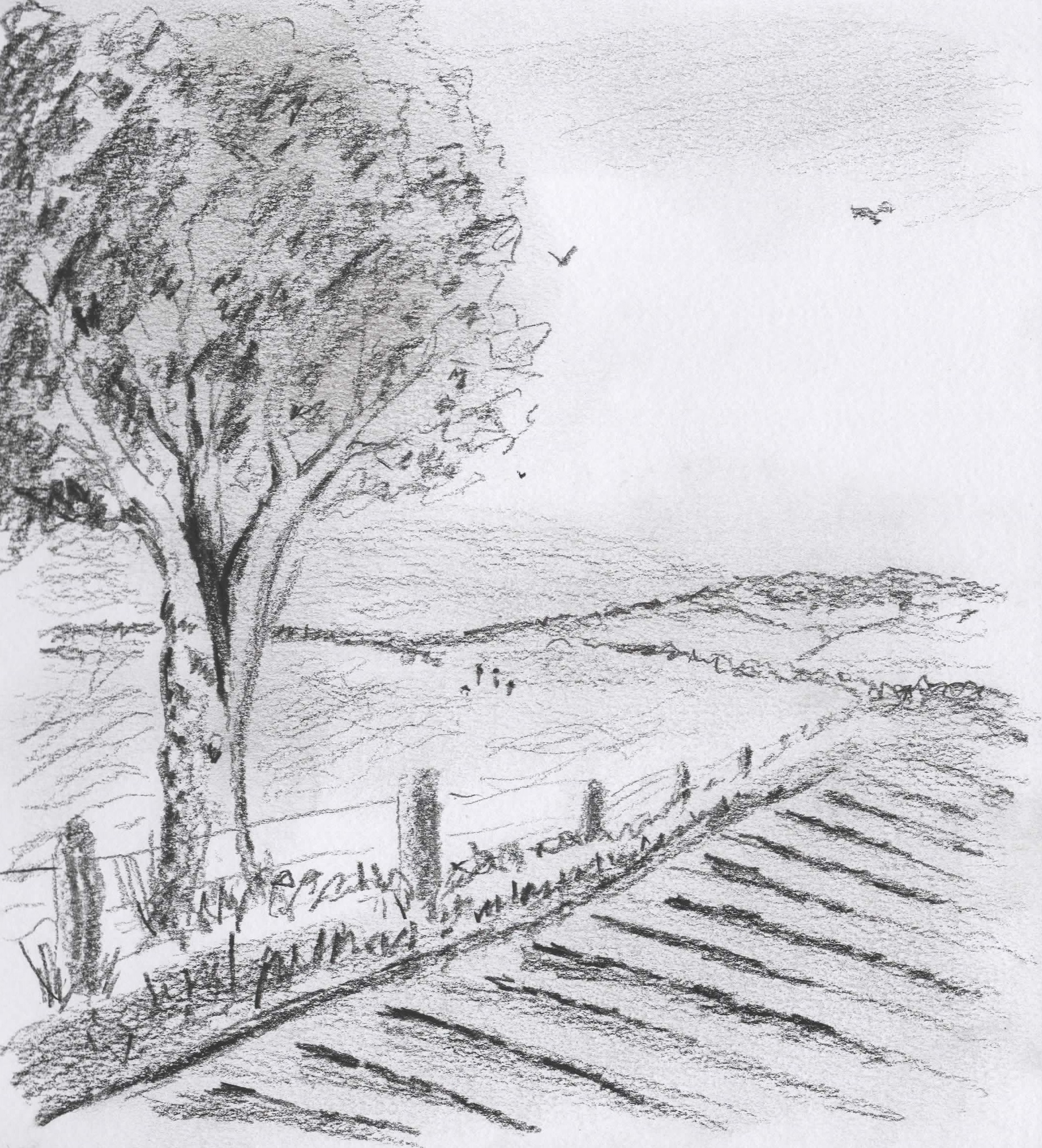 Tree and Fields in Pencil.