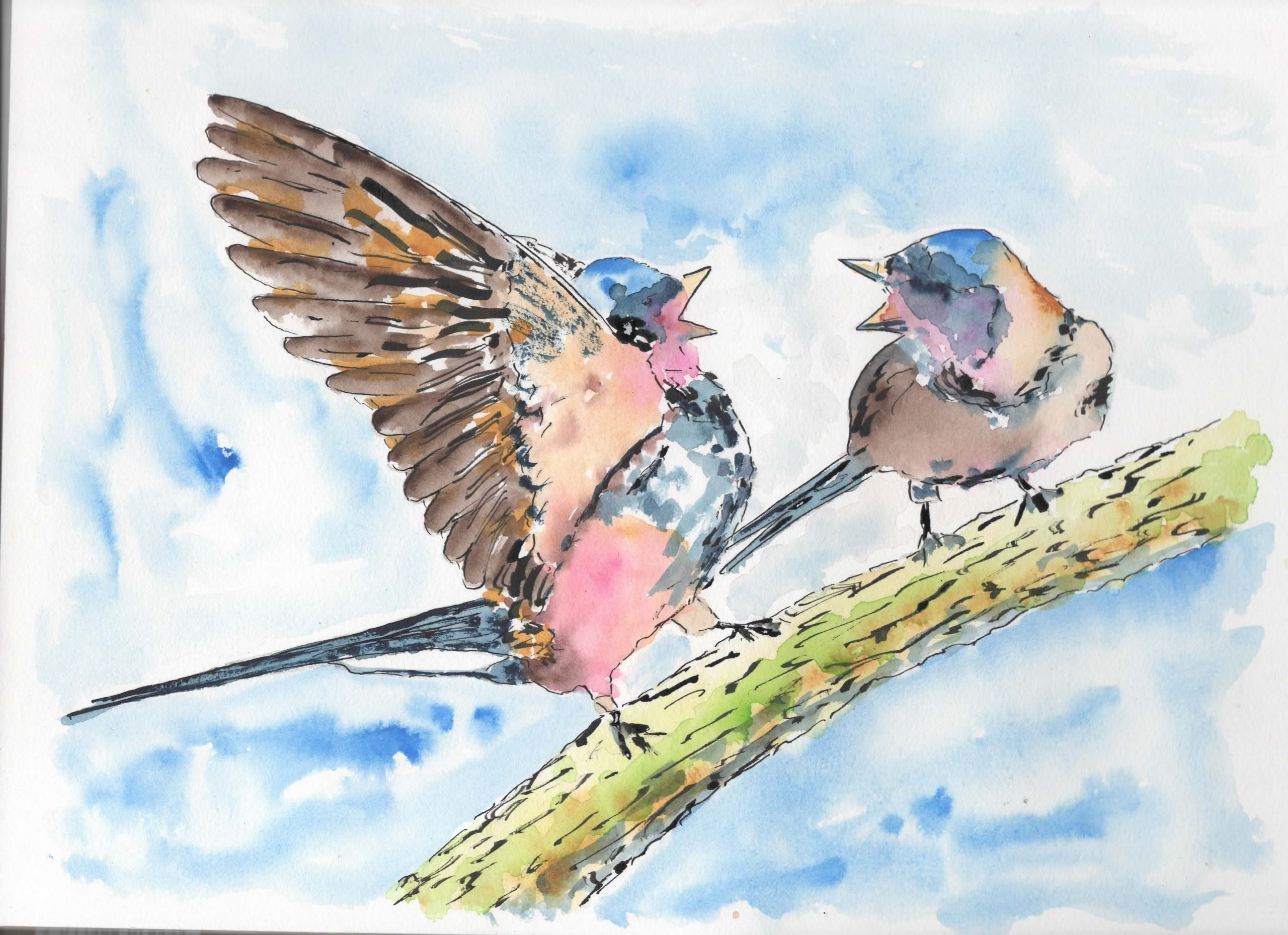 Two Swallows Arguing.