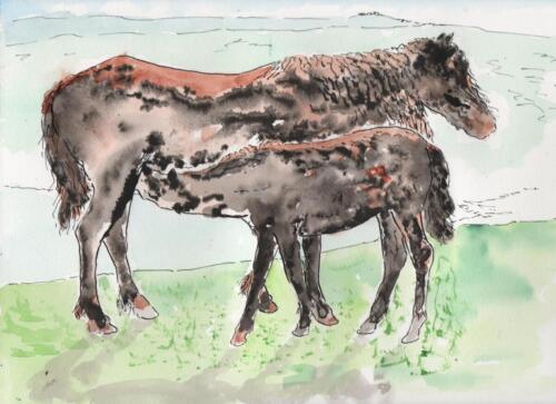 Dartmoor Pony & Foal