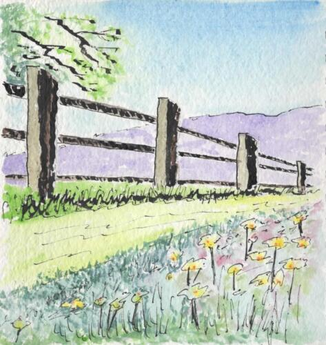 Fence on Wildflower Meadow.