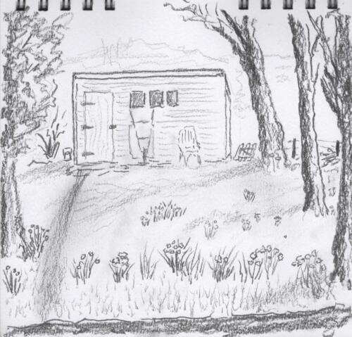 Shed and Daffodils